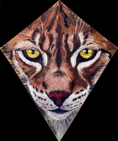 95 Lynx Kite